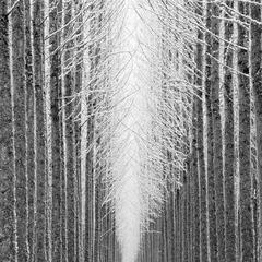 Tree Cathedral, Jeffrey Conley