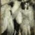 20140522185723-spirit_dance_samba-brazil_4