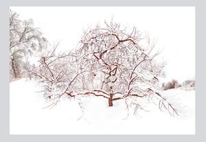 20140606140419-raissa_venables_icy_orchard_2014_132_x_192_archival_pigment_print_wagner_partne_webr