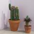 20140609212946-plants