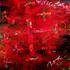 20140619082413-newmulticulturalism_lowres121936__121936