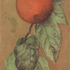 20140717202304-one_persimmon