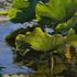 20140723150114-amidst_lotus_iii_