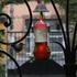 20140726031718-jaki_irvine_hummingbird