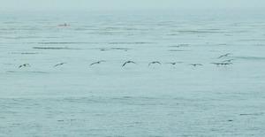 20140729182040-saar_adrift