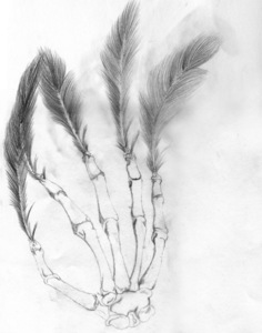 Feather_hand