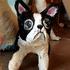 20140809211139-douglas_alvarez__puppy_love__1_