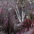 20140830233242-weepingforest