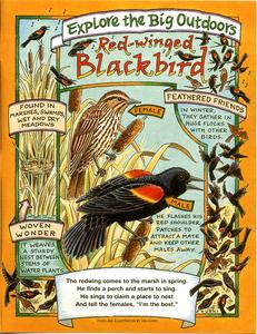 20141001181007-redwing_blackbird_real_page