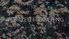 20141204121130-a_crazed_flowering