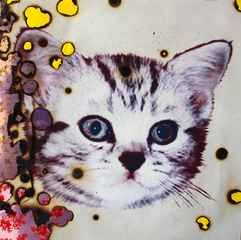 I (heart) Kitties, MIYOSHI BAROSH
