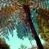 20150123024917-botanicala