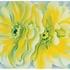 20150125164140-yellow-cactus_okcr0675_1200_72dpi_rgb-1024x733