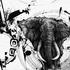 20150207173000-elephant_ink_1