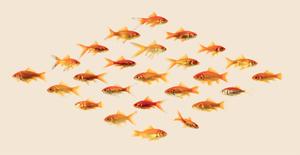 20150216213022-goldfish58001web