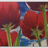 20150228155702-az_423__bh__tulips__injection_