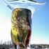 20150312140344-bikkel---bull-yellow-eye---glass---41x39x17cm