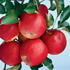 20150322155250-apples_web