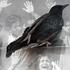 20150325161348-dead_bird_2008_c_geert_goiris