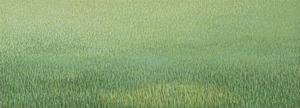 20150413192810-grassland-37_2012_17x47