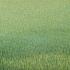 20150413195959-grassland-37_2012_17x47_web