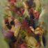 20150504021612-spring_arrives_acrylic_20x16_b13015