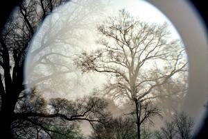 20150513204441-leah_oates__moonlight_-_prospect_park__circle_trees_1__2012-2014