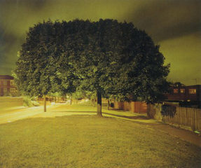 Untitled #1, Richard Billingham
