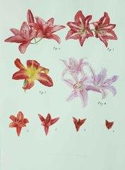 Plant No. 15, Guo Hongwei