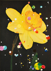 No. 36 Narcissus Incomparibilis Fortune, Sebastiaan Bremer