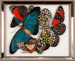 20150908163117-manda01_butterflies