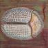 20151014174550-pdpackard_tortoisebeetle