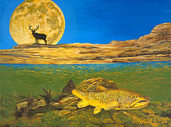 Timing_brown_trout_web300