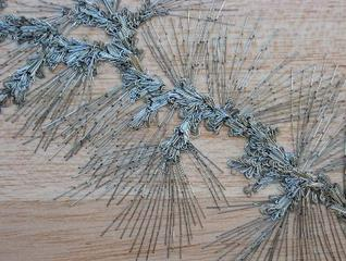 Untitled, (pine detail), Alison Foshee