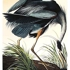 After_audubon_images_001