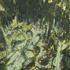 Mossy_logs__602x764_copy