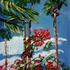 20160203163413-more_palms_out_back