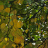 20160315213326-june_yokell__central_park_in_october__oil_on_canvas__30_x_40__2500