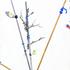 20160624171205-carson_fiskvittori_3_weather_pollination_techniques_7x4-web