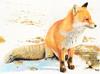 20160627002806-fiorentino__james__red_fox