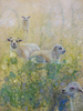 20160627003731-prindaville__shelby_-_lambs_in_field