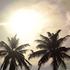 20160720215014-sunpalmtrees_2016